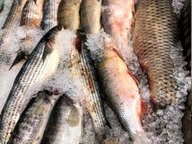 Fangen Sie den Fisch, der zu Ihnen schwimmt Fragment vom Fischspeicher Lizenzfreies Stockbild