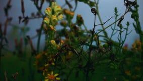 Fangen Sie die Blume auf, die in den Wind vor dem hintergrund des Regenhimmels beeinflußt stock video