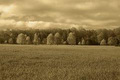 Fangen Sie mit Baumlandschaft mit grasartigem Traum wie Gelände und sogar auf Lizenzfreies Stockfoto