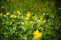 Fangen Sie mit Blumennahaufnahme mit bokeh auf Lizenzfreie Stockfotos