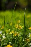 Fangen Sie mit Blumennahaufnahme mit bokeh auf Stockfotografie
