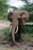 Fango-baño del elefante Imagen de archivo