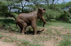 Fango-baño del elefante Fotografía de archivo libre de regalías