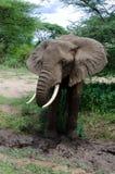 Fango-baño del elefante Fotos de archivo