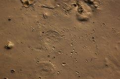 Fango con i crateri Fotografia Stock Libera da Diritti