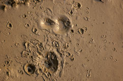 Fango con i crateri Fotografia Stock