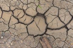 Fango del suelo seco con la plántula y los pepbles imagenes de archivo
