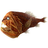 Fangtooth Fish Isolated on White 3D Illustration Stock Photography