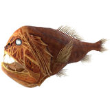 Fangtooth Fish Isolated on White 3D Illustration Stock Photos