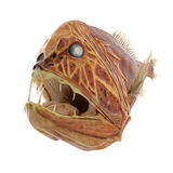 Fangtooth Fish Isolated on White 3D Illustration Royalty Free Stock Photo