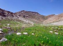 Fann山背景的绿色草甸  免版税库存图片