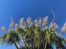 Top of palm trees against blue sky Stock Image