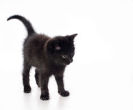 Fanny black kitten Royalty Free Stock Photography