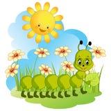 Fanny caterpillar. Stock Image