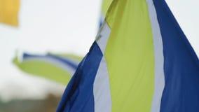 Fans de Footbal ondulant les drapeaux bleus jaunes banque de vidéos