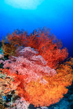 Fans de mer brillamment colorées Image stock