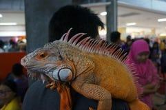Fans de reptile Photographie stock libre de droits