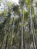 Bamboo kyoto Japan forest nature stock photo