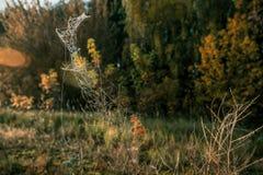 fantástico condujo en la hierba del otoño foto de archivo