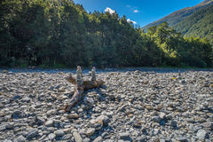 Rainforest near Fantail Falls, located in Mt Aspiring National Park, along HAAST Highway in south island of New Zealand Royalty Free Stock Images