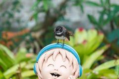 Fantail ptak Obrazy Stock