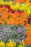 Fantasía de la flor Fotografía de archivo libre de regalías