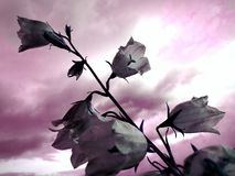 Fantasía del arte de la naturaleza Imagen de archivo libre de regalías