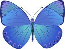 Fantasía del azul de la mariposa Fotografía de archivo libre de regalías
