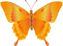 Fantasía del fuego de Papilio Fotografía de archivo libre de regalías