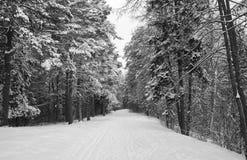 Fantasía del invierno en bosque Fotos de archivo libres de regalías