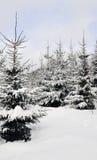 Fantasía del invierno en bosque fotografía de archivo libre de regalías