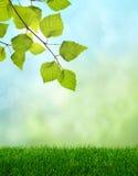 Fantasía del resorte de la hierba verde Imagenes de archivo