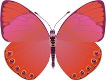 Fantasía del rojo de la mariposa stock de ilustración