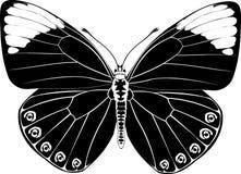 Fantasía negra de la mariposa Fotos de archivo