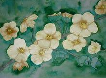Fantasi av den körsbärsröda blomningen som blommaagaint och smaragdbakgrund Arkivfoton
