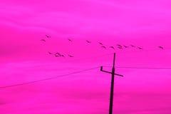 Fantasi av fåglar Royaltyfria Bilder