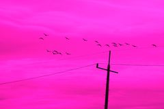 Fantasia degli uccelli Immagini Stock Libere da Diritti