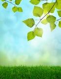 Fantasia della sorgente dell'erba verde Fotografia Stock Libera da Diritti