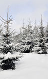 Fantasia do inverno na floresta Fotografia de Stock Royalty Free