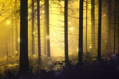 Fantasie abstracte glimworm in het mistige bos stock foto's