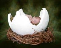 Fantasie-Portrait Ifant, das in gebrochenem Ei schläft Lizenzfreies Stockbild
