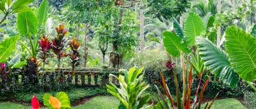 Fantasie tropische installaties in bemoste tuin Stock Foto's