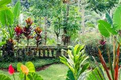 Fantasie tropische installaties in bemoste tuin stock fotografie