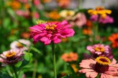 Fantasie von Farben von Blumen am Frühling stockbild