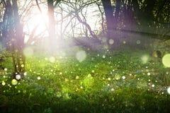 Fantasie-Wald Stockfotografie