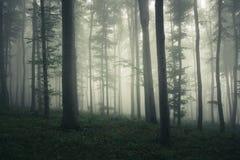 Fantasiebos met mist en surreal licht stock afbeelding
