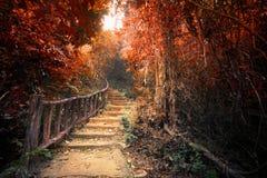 Fantasieherbstwald mit Wegweise durch dichte Bäume Stockfotos