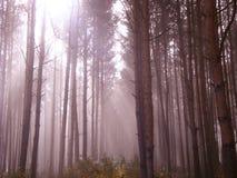 Fantasieldflugan tänder i den dimmiga skogen för den magiska solljussagan arkivfoto
