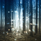 Fantasieleuchtkäferlichter im nebeligen Wald Lizenzfreies Stockfoto