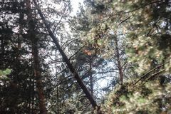 Fantasielichten in het magische mistige bos van het zonlichtsprookje royalty-vrije stock foto